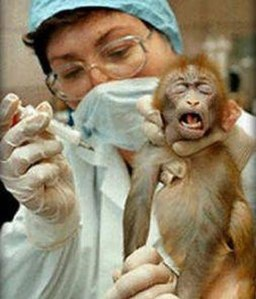https://marcusampe.files.wordpress.com/2011/09/animal-testing.jpg?w=256