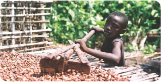 cocoa childlabour